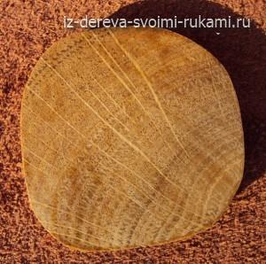 Дуб. Образец дерева