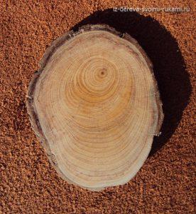 Кипарис. Кусок дерева