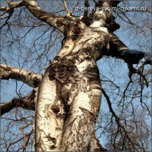 необычные деревья,чудеса природы