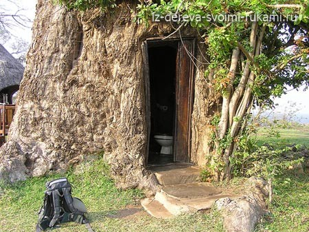 дерево-дом, необычные деревья