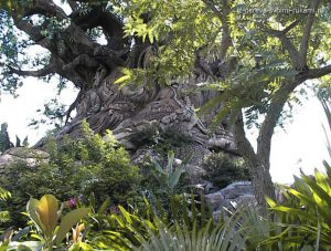 необычные деревья,причуды природы