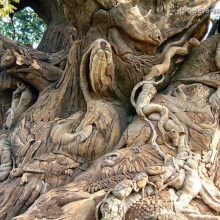Необычные деревья.Причуды природы