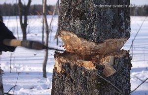 заготовка древесины, порядок заготовки