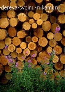 заготовка древесины для поделок