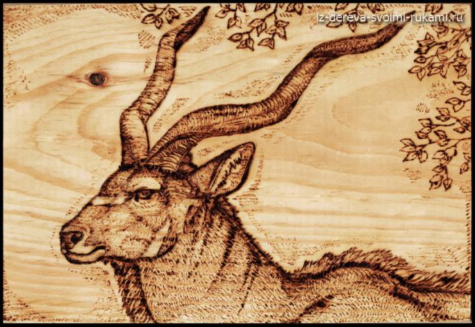 Рисунки и эскизы для выжигания по дереву.Серия животные
