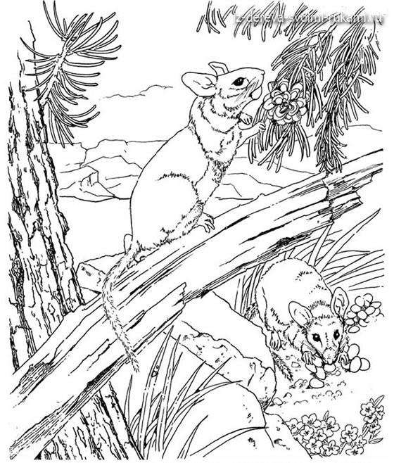 рисунки и эскизы для выжигания по дереву.Животные