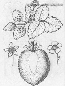 картинки и узоры для выжигания по дереву: цветы, злаки, фрукты, ягоды