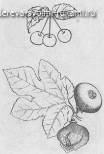 выжигание по дереву, эскизы: цветы, злаки, овощи, ягоды