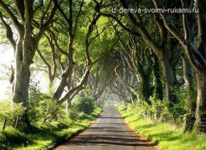 самая красивая дорога из деревьев Dark Hedges