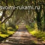 самая красивая дорога, аллея Dark Hedges