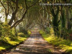 Самая красивая дорога. Буковая аллея Dark Hedges