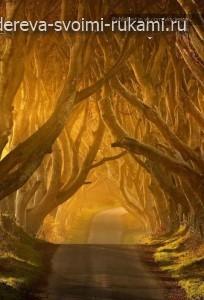 необычные деревья, аллея Dark Hedges
