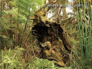 сказочный мир деревянных скульптур Бруно Торфса