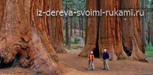 самое большое дерево в мире, дерево генерала Шермана