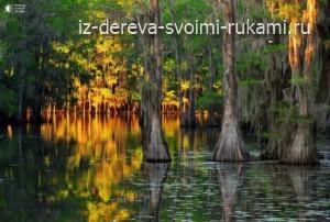 WPzZSnUhu8I - Из дерева своими руками! Интересные деревянные поделки, мебель, мастер-классы по дереву - Волшебные кипарисы на озере Каддо