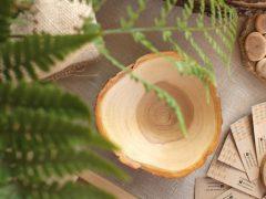 Удивительные тарелочки из срезов дерева, 13 фото