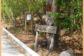 Манцинелловое дерево – самое опасное дерево в мире