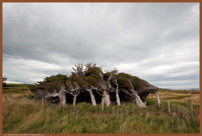 SlopePoint6 - Из дерева своими руками. Мастер-классы по дереву - Гнутые деревья в Новой Зеландии